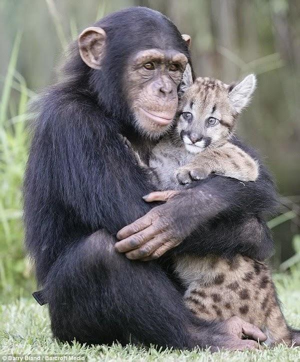 aap met geliefde